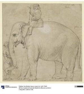 Der Elefant Hanno