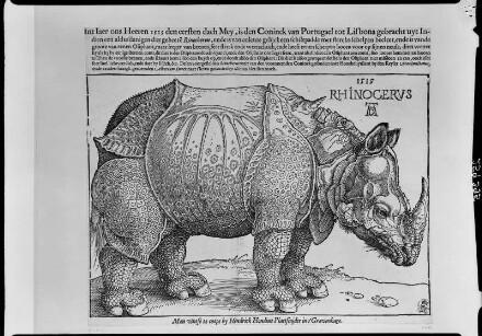 Das Nashorn (Rhinocerus)