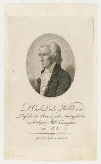 Bildnis des Carl Ludwig Wildenow