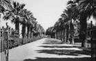 Palmenallee (HAPAG-Mittelmeerfahrt der Oceana Leonhardt 1929)