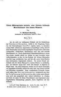 Ueber Rhizopoden und denselben nahestehende Organismen : Morphologische Studien von Richard Hertwig und E. Lesser