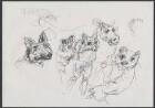 Studie zu Reineke Fuchs. Unveröffentlichte Zeichnung