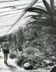 Hamburg. Planten un Blomen. Kakteenwald unter Glas. Die Schaugewächshäuser des Botanischen Gartens der Universität Hamburg entstanden zur IGA 1963.