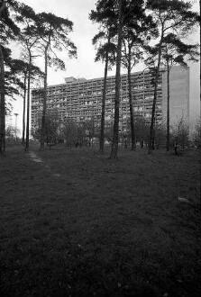 Berlin: Le Corbusier-Haus; Vordergrund Kiefern