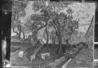 Der Irrenhausgarten von Saint-Rémy